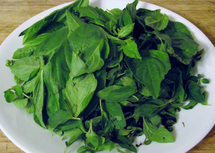 Fresh basil and fresh oregano on a plate.