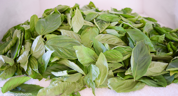 Basil leaves drying on a towel.